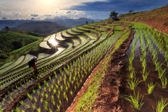 rice-fields-terraced-chiang-mai-thailand-beautiful-sunset-48481072