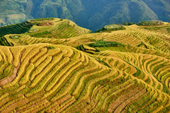 rice-terraced-fields-wengjia-longji-longsheng-hunan-china-46897948