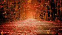 __autumn_dream